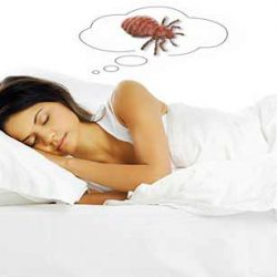 Dream about lice
