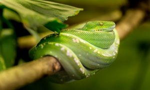 biblical meaning of killing a snake in a dream