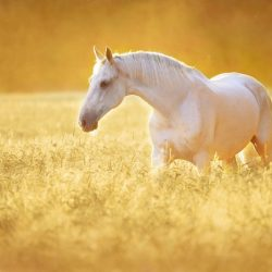 white horse dream meaning