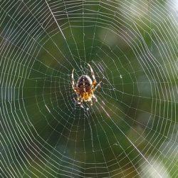 dream of spider web